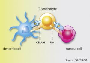 Types of checkpoint inhibitors
